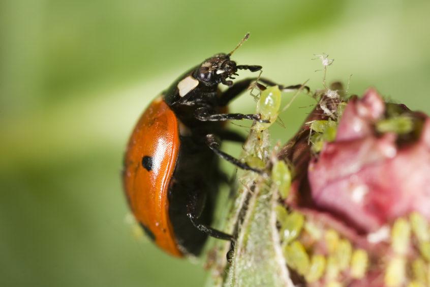 Integrated pest managment