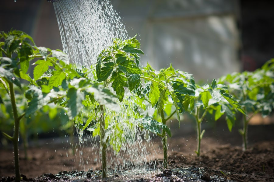 how often to water plants