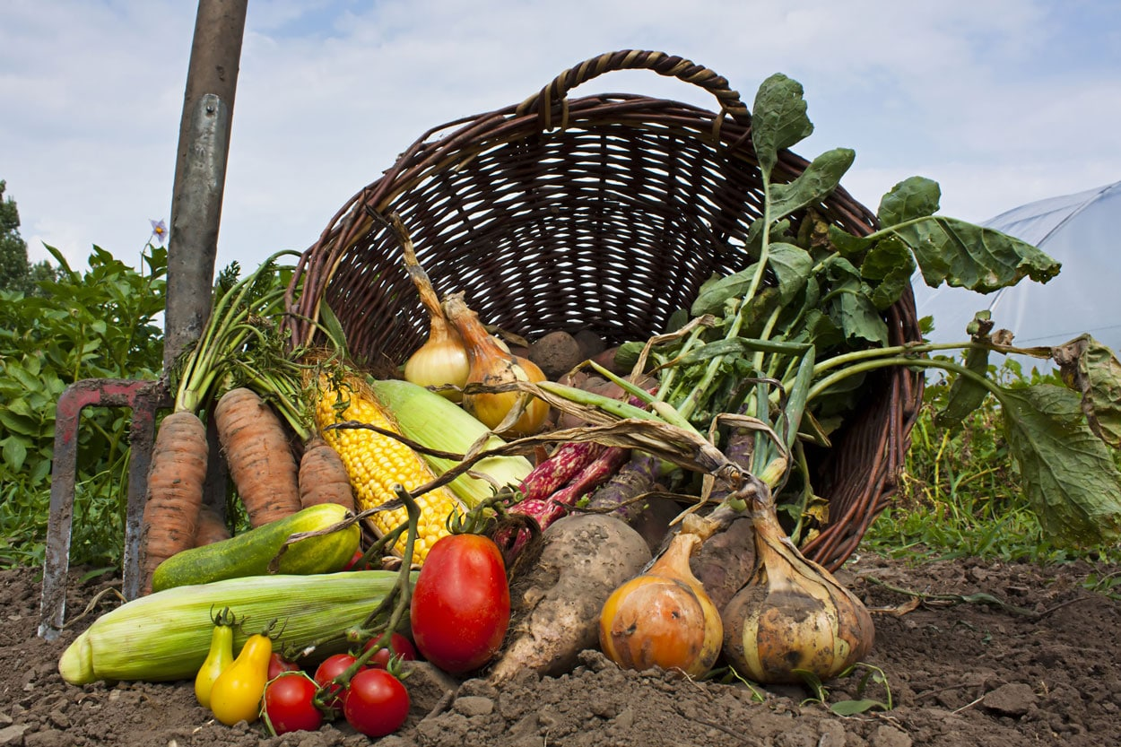 "Featured image for ""Grow a Vegetable Garden"""
