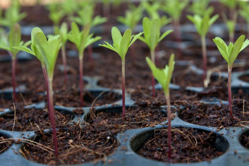 seedlings-planting seeds for beginners