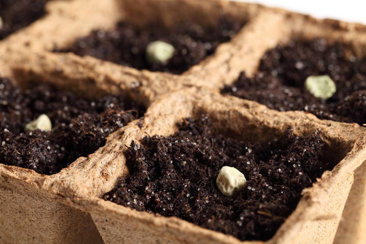 "Featured image for ""How to Start Seeds Indoors"""