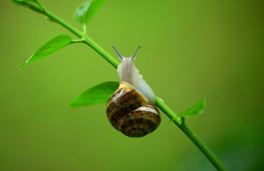 How to Get Rid of Snails and Slugs in the Garden