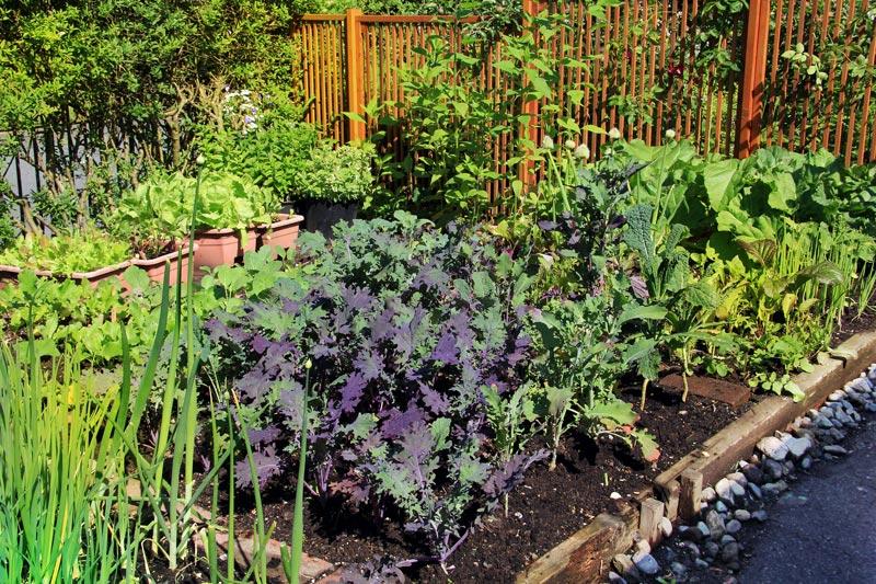 gardening in san diego