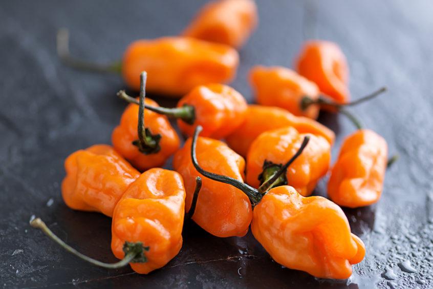 orange habanero