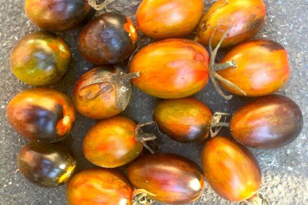 Magic Bullet Tomatoes