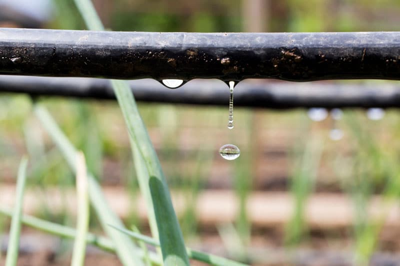 How to Keep Soil Moist with drip irrigation