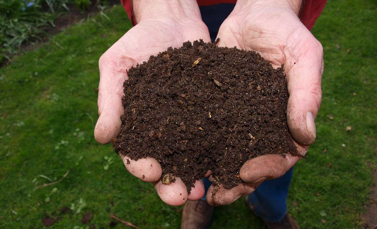 """Featured image for """"How to Keep Soil Moist in Warm Weather"""""""