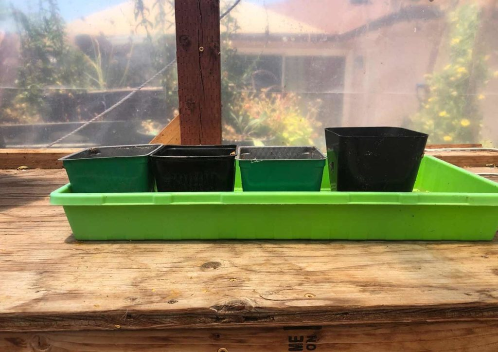 Fall Vegetable seeds- Bottom watering tray