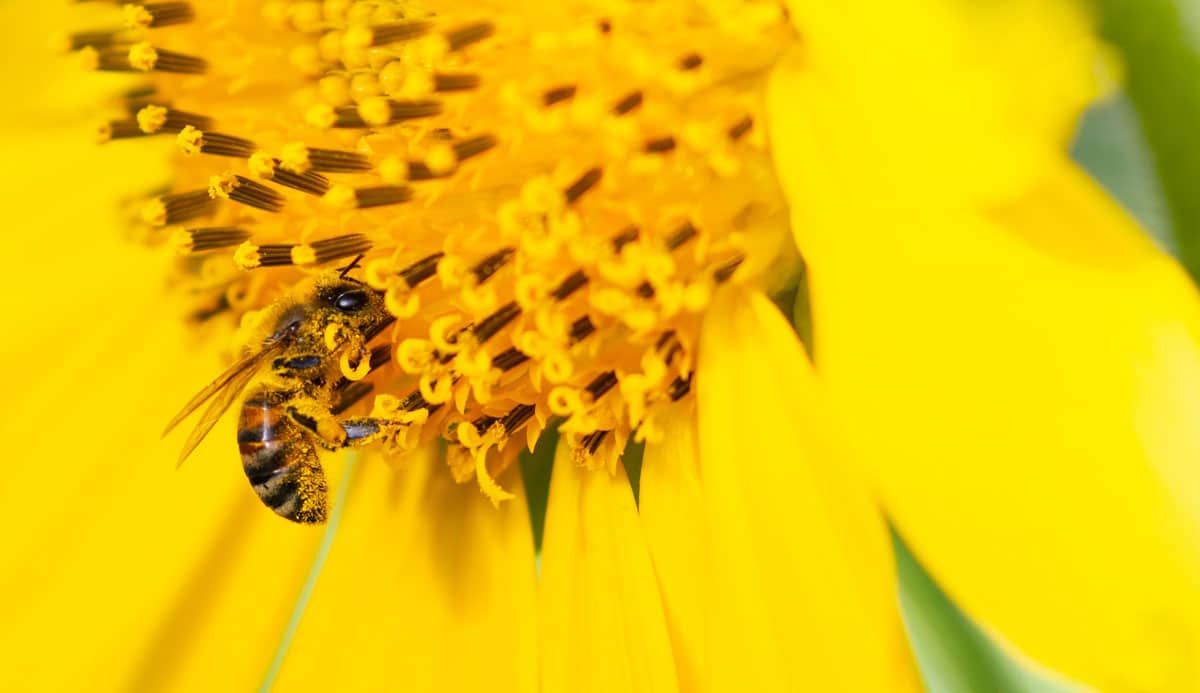 """Featured image for """"Pollinator Plants"""""""