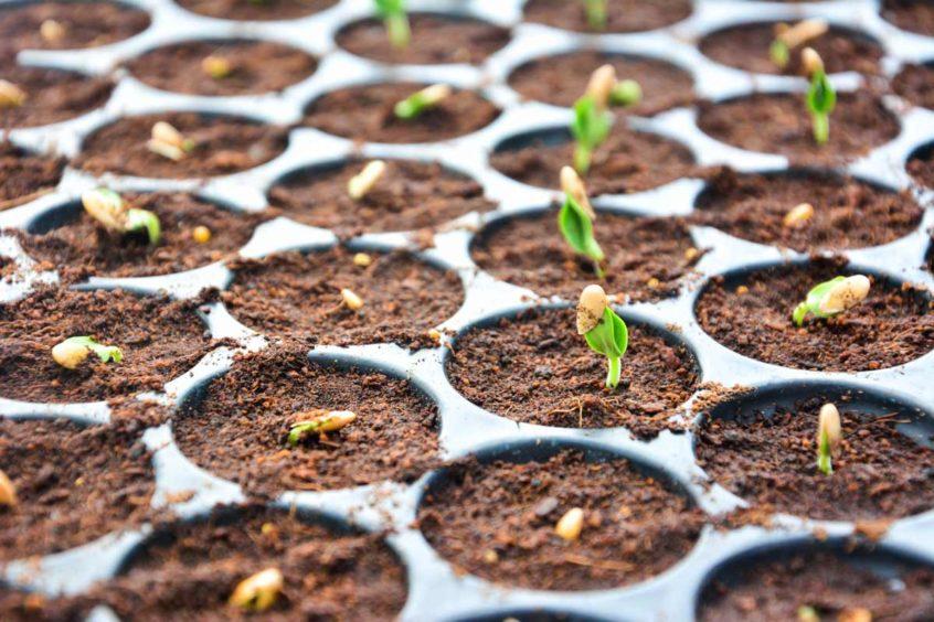 Fall Vegetable Seeds